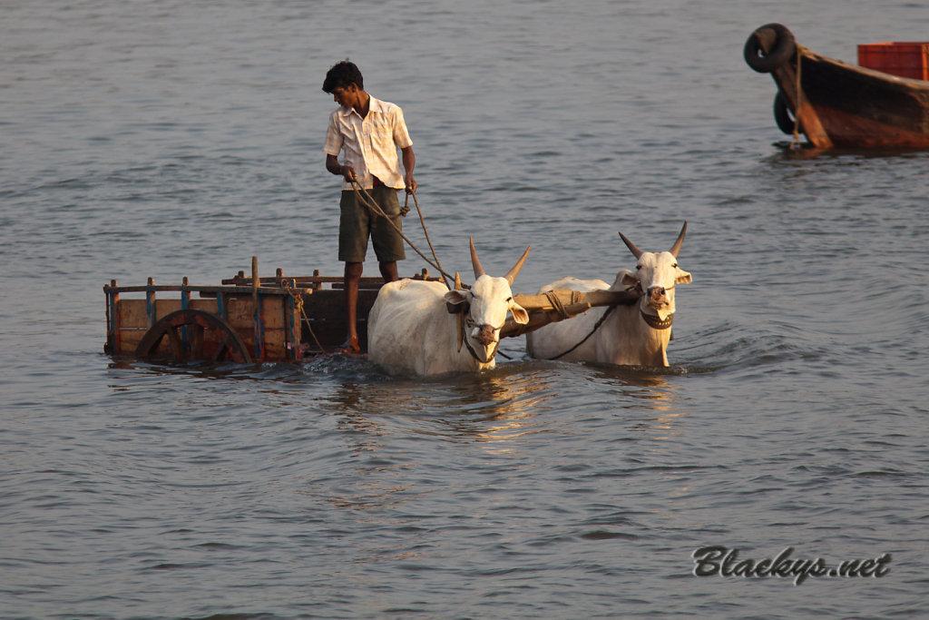 Fischtransporter